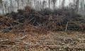 незаконная рубка деревьев