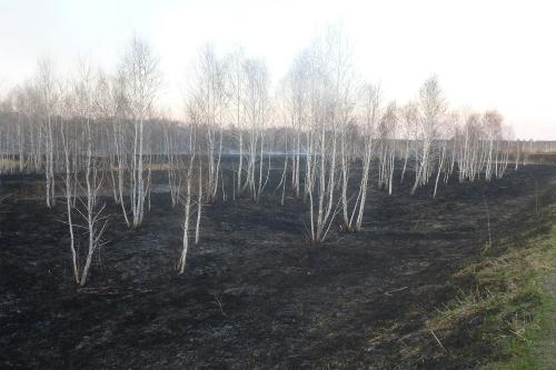 И один в лесу воин. Инспектор Анатолий Арапов в одиночку справился с пожаром в Варламовском заказнике